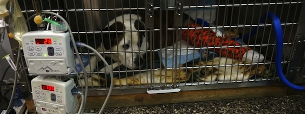 Web video for Animal Emergency Center of Central Oregon